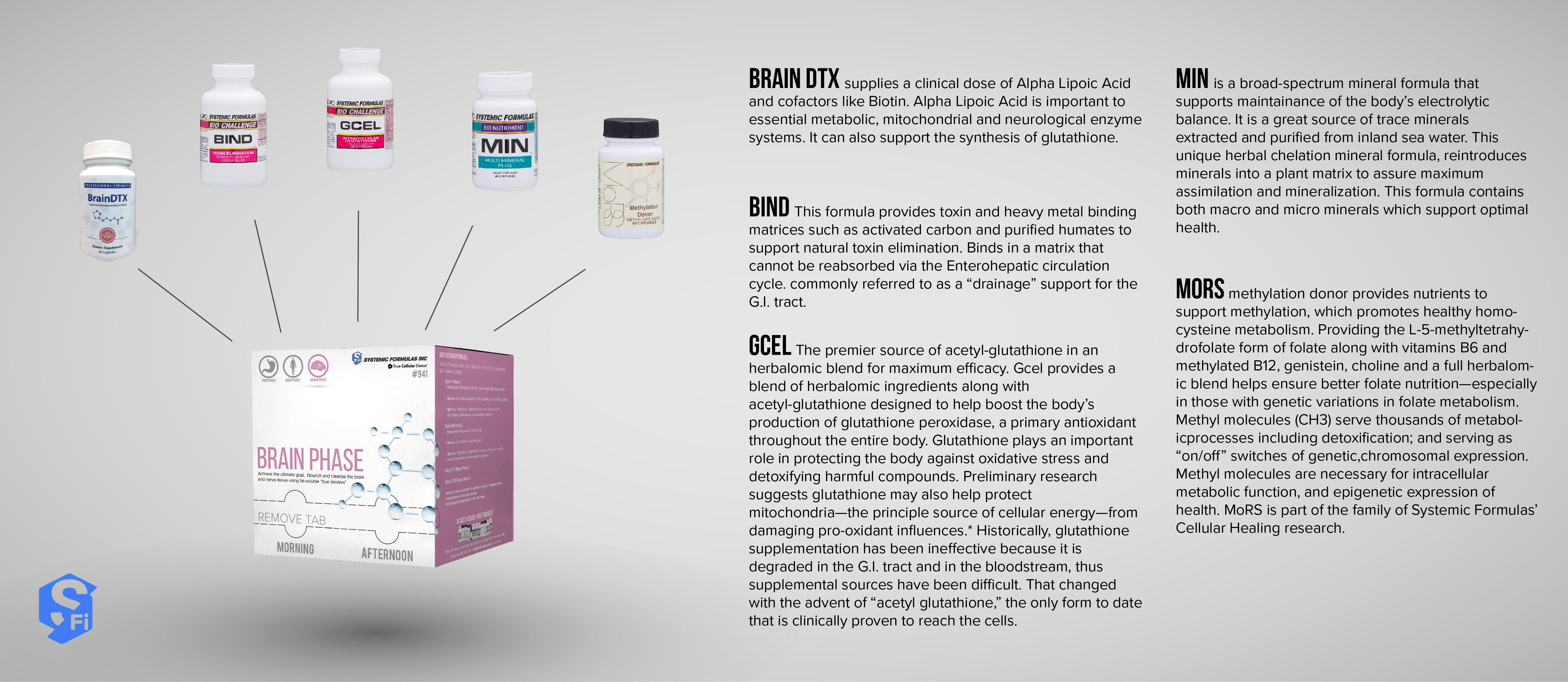 Brain Phase infographic